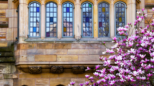 Victorian windows and magnolia blooms at Yale University.