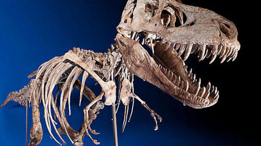 The skeleton of a Tyrannosaurus bataar.
