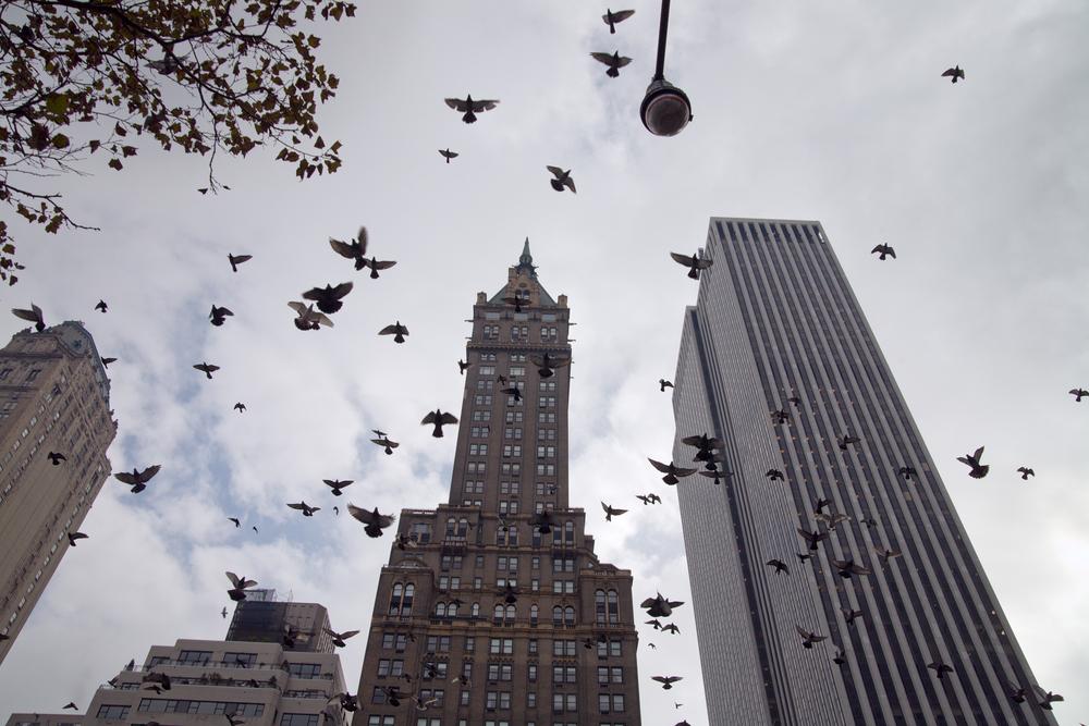 Glass Pigeons Adorn New York City