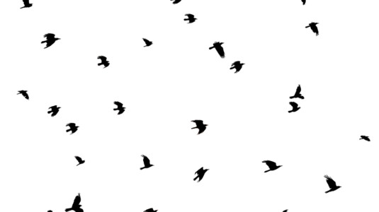 An image of a flock of birds in flight.