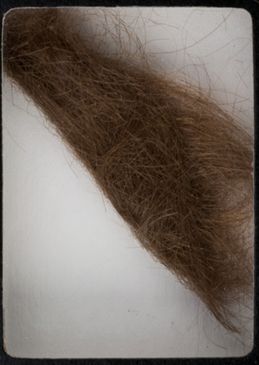 A four-inch lock of John Lennon's hair.