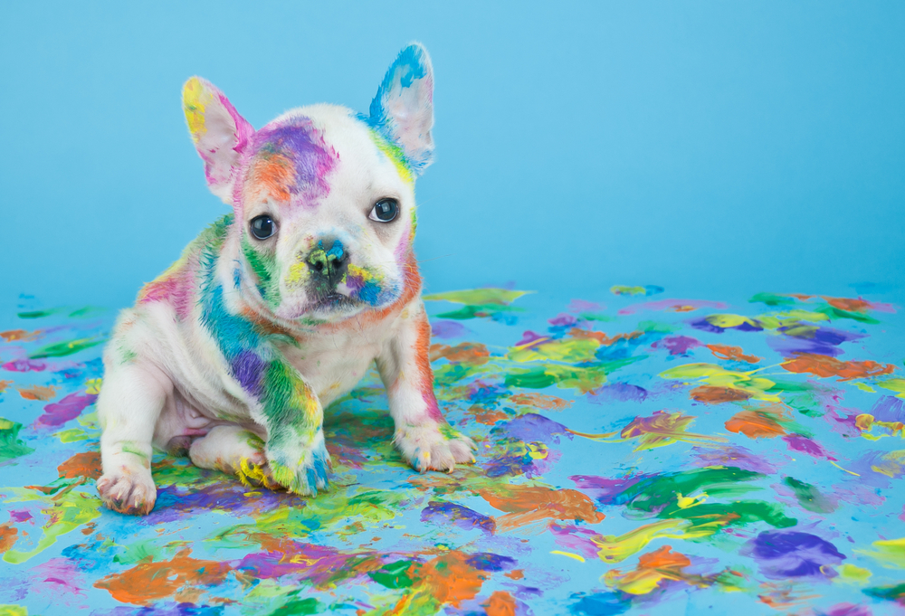 'Dogumenta': The Art Exhibit By Dogs for Dogs